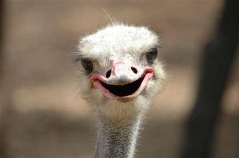 gif sourire ou grimace animaux droles lol