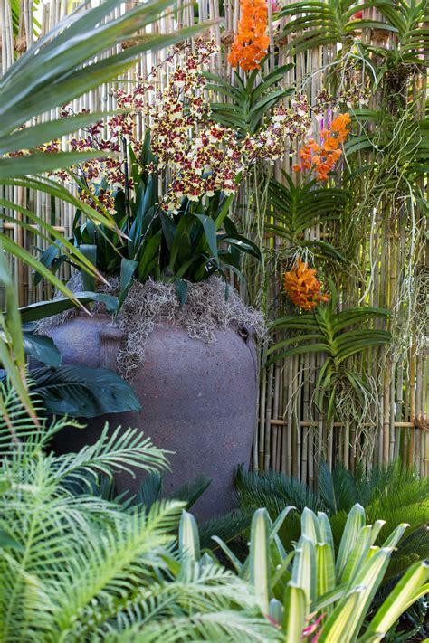 orchid show thailand press room  york botanical
