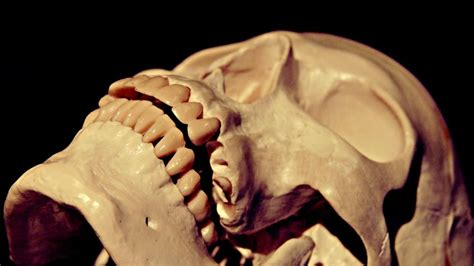 pressure   human skull withstand