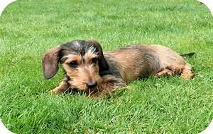 Hortensia giftig voor honden