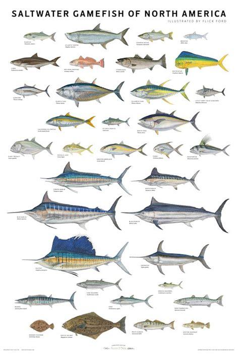 fish  chips john dunbar kilburns blog
