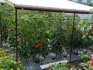 Tomatenzelt Selber Bauen : meine tomaten welt ~ Eleganceandgraceweddings.com Haus und Dekorationen