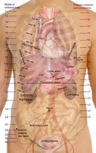 Gallbladder Location  Anatomy  Parts  Function  Pictures