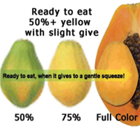 how to tell if a papaya is ripe when leprechauns travel to the tropics