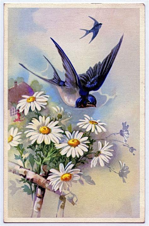 vintage clip art swallow  daisies  graphics fairy