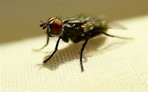 Interesting Facts About Insects – Top 10 Gruesome Insect ...
