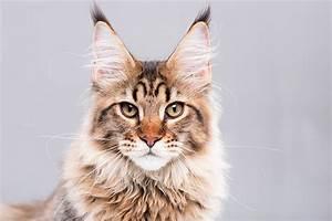 Katze Kotzt Viel : katzen die besonders viel haaren ~ Frokenaadalensverden.com Haus und Dekorationen