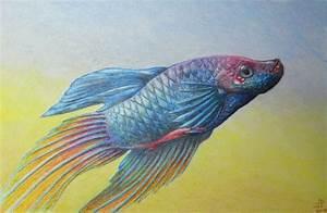 Betta Fish by dalbin on DeviantArt