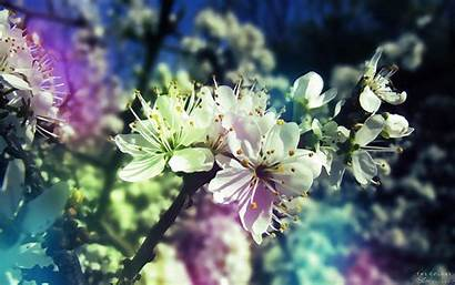 Spring Wallpapers Stunning Iphone Flowers Nature 3d