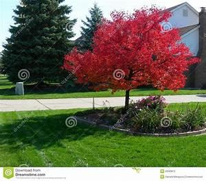 Baum Mit Roten Blättern : baum im herbst mit vibrierenden roten bl ttern stockfoto bild 20593872 ~ Eleganceandgraceweddings.com Haus und Dekorationen