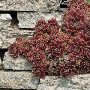 Pflanzen Für Trockenmauer : naturagart shop trockenmauer 20 online kaufen ~ Orissabook.com Haus und Dekorationen