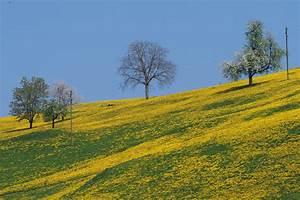 Die Farbe Gelb : die farbe gelb foto bild landschaft motive natur bilder auf fotocommunity ~ Watch28wear.com Haus und Dekorationen