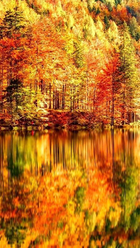beautiful autumn landscape lake  forest