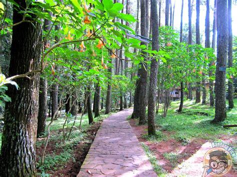 menelusuri hutan alami  taman hutan raya ir  djuanda