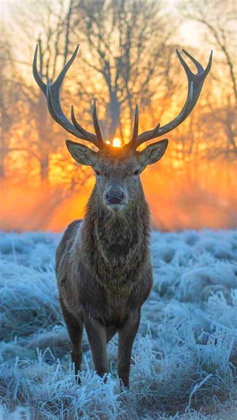 beautifulwildlifenatur source beautiful wildlife