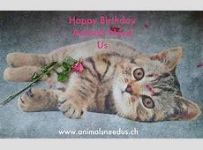 Happy Birthday Animals Need Us 2 Jahre – Animals Need Us