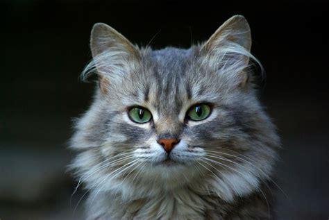 Gatto I Molteplici Benefici Che Gli Amici Felini