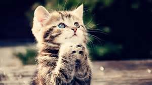 Description + Cat = Game! - Page 3 Th?id=OIP.M0e8df689ed1350d94eb4f991c856a2ceo0&pid=15