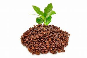 5 unique ways to use coffee grounds for plants and gardening