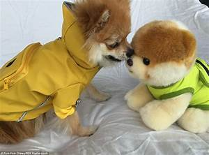 Cute dog Pom Pom Chewy becomes internet hit by posing in ...