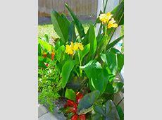 Tropical poolside landscape plantings Garden Pinterest