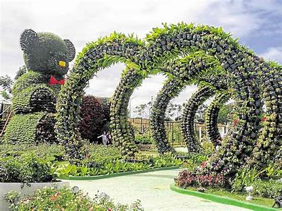 Garden Bulacan Roses Flower Power Stop Smell