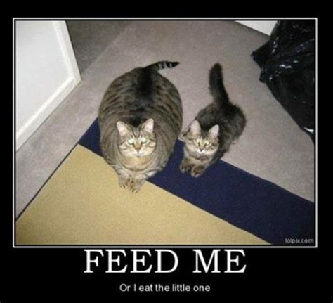 Funny Hungry Meme - kitten memes funny kitten pictures memey com page 2