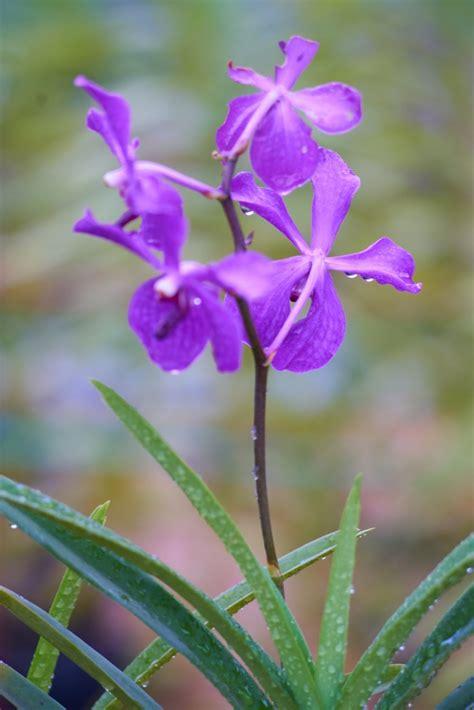 blume mit lila bl 252 ten der kostenlosen fotos