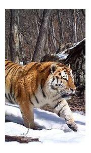 Top Predators | Zoological Society of London (ZSL)
