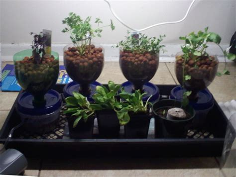 compact cheap  expandable hydroponics system  steps