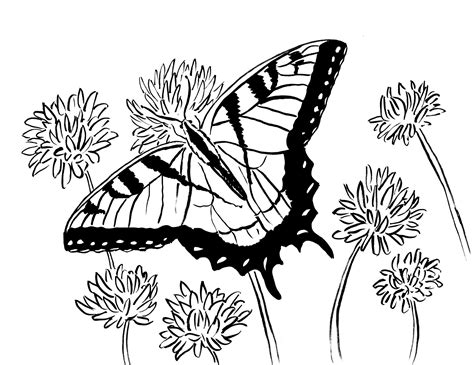 swallowtail butterfly coloring page art starts