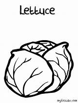 Coloring Lettuce Template Pages Popular sketch template