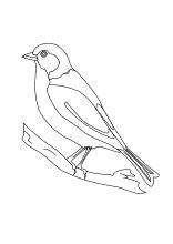 malvorlagen voegel vogel raubvogel ente gans schwan ausmalbilder