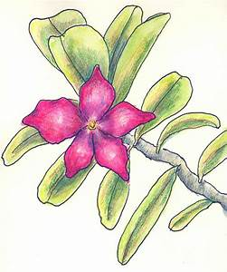 BowlShaped Flowers Drawing