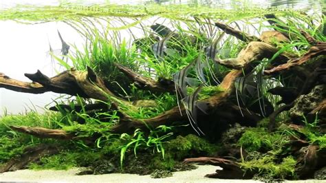 Most Beautiful Aquascapes by Most Beautiful Aquascapes Underwater Landscapes