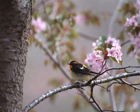humming birds  screensavers
