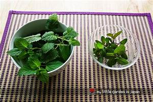 How to Make Lemon Balm and Mint Tea - Natural Attraction - Pinterest  Fibromyalgia Lemon Balm