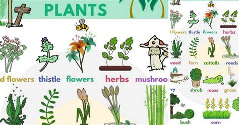 plant names list  common types  plants  trees