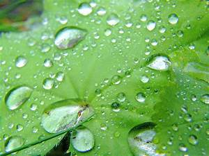 File:Water drops on green leaf.jpg - Wikimedia Commons