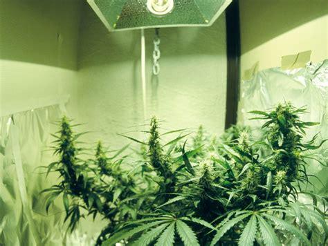 remodeling  marijuana grow house   normal