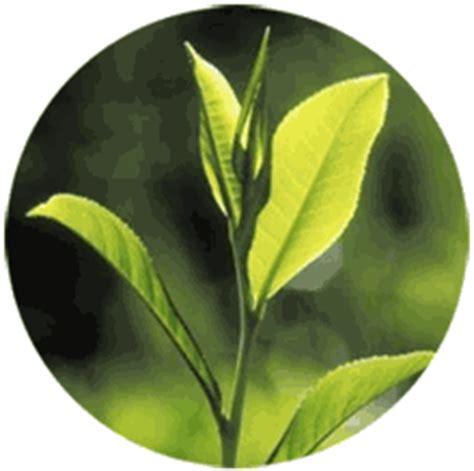 teh herbhouses blog