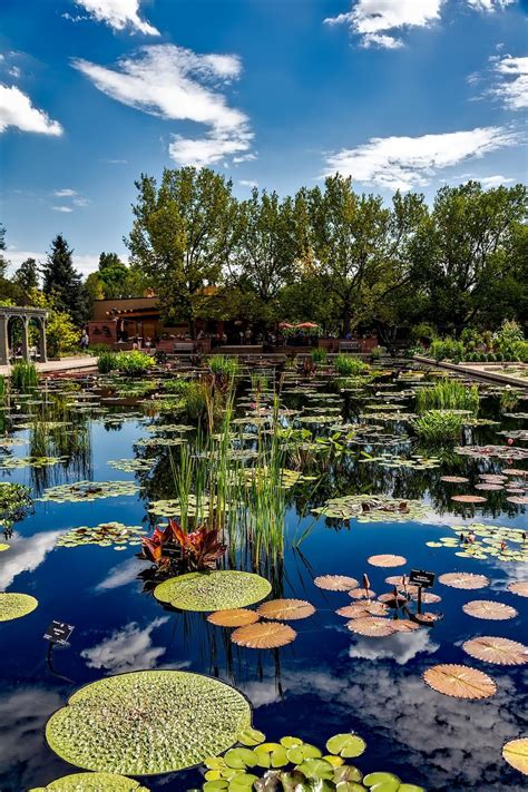 botanic gardens denver 11 things you ll only understand if you ve been to denver