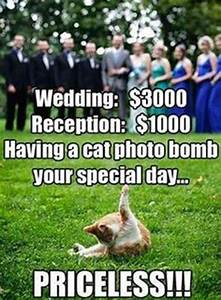 1000+ images ab... Wedding Fever Quotes