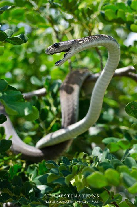 types  venomous snakes  southern africa sun safaris