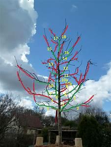 Wann Apfelbäume Schneiden : apfelbaum schneiden apfelbaum herbst apfelbaum schneiden ~ Lizthompson.info Haus und Dekorationen