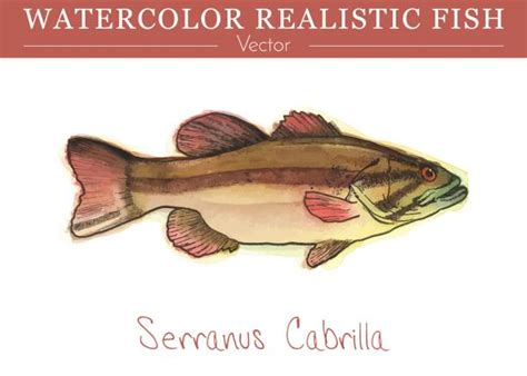 fish edible vector painted watercolor grouper hand clip illustrations similar illustration preview