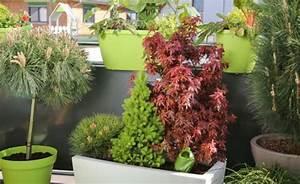 Schattenpflanzen Garten Winterhart : balkon gestaltung mit pflegeleichten immergr nen mein ~ Lizthompson.info Haus und Dekorationen