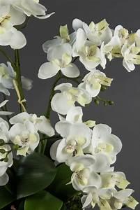Künstliche Pflanzen Wie Echt : orchideen arrangement wei im wei en dekotopf ja ~ Michelbontemps.com Haus und Dekorationen