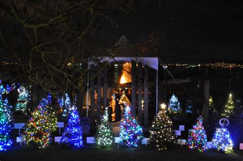 the dundarave festival s forest of christmas trees shining