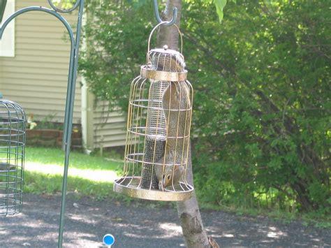 how to squirrel proof bird feeders squirrel proof bird